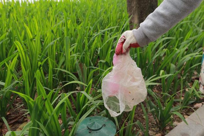 Nhóm thực hiện thu gom rác thải, pin chì vứt bừa bãi tại khu vực Bờ Hồ (Hoàn Kiếm, Hà Nội).